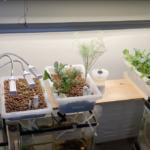 Aquaponic farm set up.
